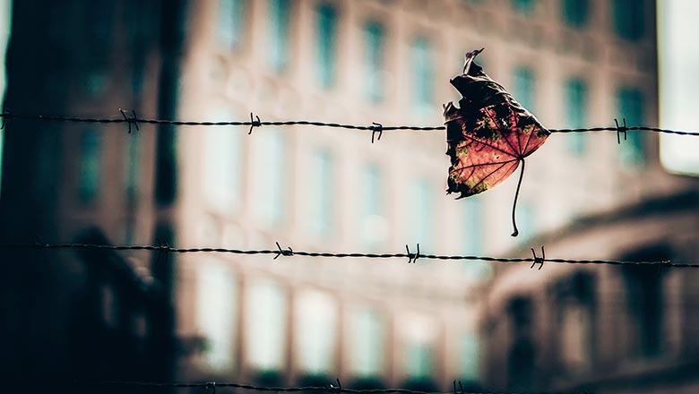 Узнай! Будет ли амнистия в 2019 году и по каким статьям в России картинки